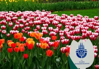 Istanbul Tulip Festival