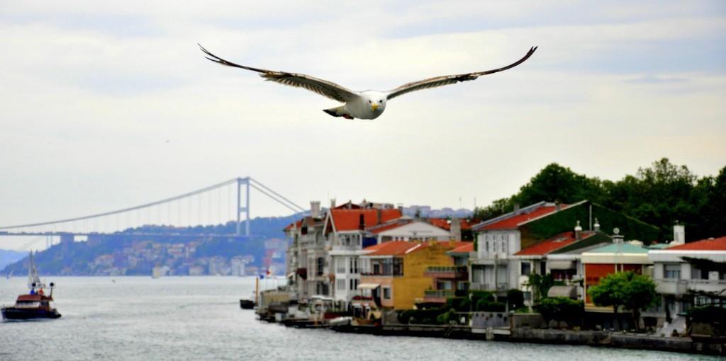 istanbul-walking-sightseeing-tours